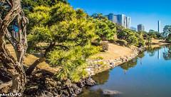 Tokyo (Omar AG) Tags: tokio japan japon