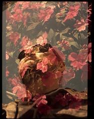 Flores em mim - Me in flowers (terencekeller) Tags: demi ee17 canon 30mm half frame meio quadro canondemiee17 fujifilm superia xtra xtra400 analógico analog v370 terence keller 35mm photofilm dupla exposição double exposition