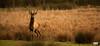 Deer (Ekaitzb) Tags: deer color nature wildlife salburua animal animalplanet d200