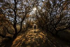 Autumn Walks. (dasanes77) Tags: canoneos6d canonef1635mmf4lisusm tripod landscape trees taray ciudadreal tablasdedaimiel nature formatthitechfilters walks autumn shadows reflections sun sunrays