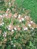 549 (en-ri) Tags: fiorellini little flowers verde erba grass cespuglio bianco sony sonysti