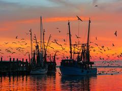Flying color (Riddhish Chakraborty) Tags: mtpleasant birds boatramp boat charleston landmark sunset nikon color tamron 70200 shemcreek