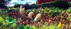 Panorama 3478_hdr_pregamma_1_mantiuk06_contrast_mapping_0.1_saturation_factor_0.8_detail_factor_1 (bruhinb) Tags: panorama hdr usa groundsforsculpture sculptorsway hamiltontownship nj carmelita autinwright
