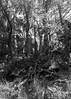Hunting for structure (Will Vale) Tags: zealandia karorisanctuary p9 wellington leica huawei karori p9plus