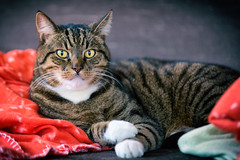 Shetti // Amsterdam Zuidoost (Merlijn Hoek) Tags: cat catmoments kat poes amsterdam amsterdammer merlijnhoek fotografie fotografiemerlijnhoek