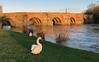 Wilton bridge, Ross on Wye (robmcrorie) Tags: ross wye wilton bridge green waterfront mute swan bird nature iphone 7 plus