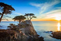 Lone Cypress (Juan Pablo J.) Tags: lone cypress california canon5dmkii color canon24105mmf4l coast clouds coastline carmel seascape seashore searocks sky sunset sundown sea outdoors ocean oceano outdoor naturephotography nature naturaleza