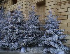 092. Paris Noël 2017 (@bodil) Tags: noël joyeuxnoëletbonneannée décorationdenoël sapin christmastree christmas merrychristmasandahappynewyear