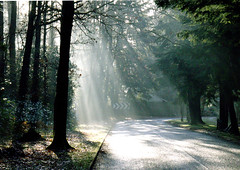 I couldn't resist (Nigel J Charlton) Tags: trees sunlight streaming rays