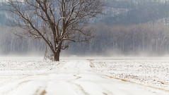 St. Charles, Missouri winter 2017 (bd_c2c) Tags: ifttt 500px landscape snow hdr trees winter canon cold adobe photoshop lightroom eos field missouri st charles lonely rural snowfall natural beauty isolated desolate wonderland county 70d william davis photography efs55250mm f456 is stm spring