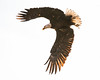 Eagle (Jami Bollschweiler Photography) Tags: bald eagles utah wildlife photography nikon northern bird photographer
