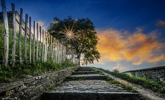 The Tree (YᗩSᗰIᘉᗴ HᗴᘉS +13 000 000 thx) Tags: fence fences happyfencefriday hff hdr namur belgium belgique bel be bélgica citadelle tree flora 7dwf