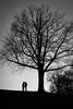 Copenhagen's Lovers (parenthesedemparenthese@yahoo.com) Tags: dem bw copenhague couples danemark denmark hiver kiss kobenhavn men monochrome nb noiretblanc shadows silhouettes trees amoureux arbres bisou blackandwhite byn canoneos600d ef50mmf18ii evening hug lovers ombres soir winter