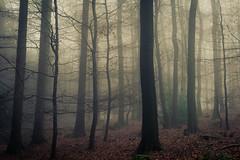 Dark Woods (Netsrak) Tags: baum bäume eu europa europe forst januar january landschaft natur nebel wald fog forest landscape mist nature tree trees winter woods rheinbach nordrheinwestfalen deutschland de