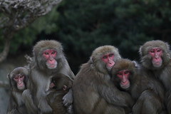 Family (Masashi Mochida) Tags: awaji awajimonkeycenter wildlife animal nature japan monkey baby mother