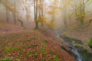 La magia del otoño