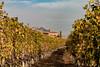 Langhe (bluestardrop - Andrea Mucelli) Tags: viti vines vineyard langhe piemonte piedmont italia italy serralungadalba barolo autunno autumn fall