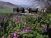 Gardening bees (Organic beekeepers in Penna San Giovanni) Tags: lamium purpureum