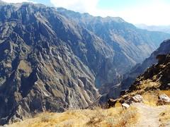 20171011_153614 (2) (massimo palmi) Tags: perù canyon colca condor colcacanyon cocariver arequipa colcavalley terrace terraces steppedterraces ande andeancondor