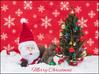 Merry Christmas (hey its k) Tags: christmas2017 santa squirrels hamilton ontario canada ca img5935e canon6d christmas tree decorate decorations squirrel