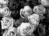 Roses in BW (Robert Cowlishaw (Mertonian)) Tags: unfolding swirled curvy robertcowlishaw downlooking shadows shades roses interesting canonpowershotg1xmarkiii markiii g1x powershot canon acedia melancholy mertonian white black blackandwhite bw