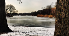 Prospect Park Snow Frozen Lake (Alexander H.M. Cascone [insta @cascones]) Tags: nyc new york city brooklyn park prospect nature snow ice tree winter landscape lake frozen freeze sky water bark trees photoshop photography cold