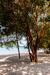 Malaysia-14307.jpg (CitizenOfSeoul) Tags: langkawi malaysia andamanensee outdoor pulaulangkawi see wildlife