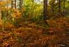 Bosque Orgi (T. Dosuna) Tags: tdosuna d7100 spain españa paisajesdeespaña paisvasco navarra