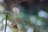 dreamy walking (hitohira_) Tags: flower floweres nature bokeh leaves