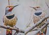Boy meets Girl. (Omygodtom) Tags: flicker bokeh bird male female oaksbottom outside wild wildlife 7dwf coth5 park pair nikkor nikon70300mmvrlens nature nikon dof d7100 digital contrast composition colorful colours red