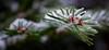 Winter Tanne (cloodwilda) Tags: snow schnee tree baum tanne winter