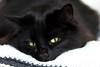 Relaxing cat (Marjan van de Pol) Tags: 5dmarkiv canon canon5d dordrecht gayla katten nederland fave favorite faved