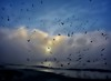 Low Clouds, Fog and Birds (beachpeepsrus) Tags: fog flight beach birds beachfront bay blue alamitosbay longbeachcalifornia longbeachgranprix light