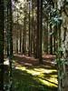 mitten im Wald (Demarmels) Tags: wald baum bäume natur uster lichtundschatten hell dunkel farben moos licht schweiz greifensee lichtung
