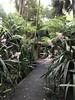 australian national botanic garden-42 (billdoyle[mobile]) Tags: australiannationalbotanicgarden act garden botanicgarden australia australiancapitalterritory anbg canberra australian billdoyle canberratripdec17jan18