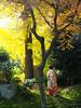 Maiko_20171127_31_1 (Maiko & Geiko) Tags: ryuhonji temple fukuno kyoto maiko 20171127 舞妓 立本寺 ふく乃 京都 宮川町 河よ志 miyagawacho kawayoshi yoshie