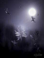 astre givré - nous sommes tous attirés vers la lumière, même les flocons  |  étude de givre sur ma fenêtre, dernière de la série (cjuliecmoi) Tags: givre glace hiver macro neige frost frozen macrophotography macrophotographie dark winter olympus