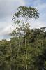 Un endroit où les arbres ont eu le temps de pousser