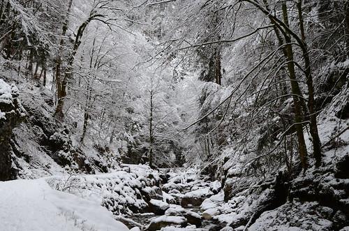 Winterwald (Kleines Melchtal OW)