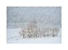 _D853115_20171219--kl.jpg (Ernst Haas) Tags: d850 winter oberland tarrenz imst laender tirol oesterreich jahreszeiten