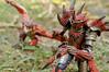DSC04693-1.jpg (maxtrese) Tags: revoltech monster hunter rathalos liolaeus red dragon