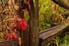 Colors in Illinois (Ken Mickel) Tags: autumn beautiful fall illinois kenmickelphotography landscape littleredschoolhousenaturecenter outdoors plants seasons closeup nature photography upclose