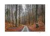 HOME (Der Zeit die Augenblicke stehlen) Tags: bäume deutschland eos700d hth56 landscape landschaft thomashesse thüringen winter