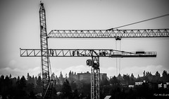 2017 - Vancouver - De-Craning (Ted's photos - For Me & You) Tags: 2017 cropped nikon nikond750 nikonfx tedmcgrath tedsphotos vignetting cranes constructioncranes industrial lines horizontal horizontallines cables vancouver vancouverbc vancouvercity cityofvancouver blackwhite bw trees