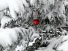Weihnachtsbaum (Miwedi) Tags: weihnachtsbaum weihnachtskugel tanne schnee weihnachten morissen graubünden schweiz 2017 christmastree