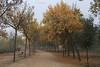 Perderme bajo tus ramas... (cienfuegos84) Tags: otoño park hojas hoja leaf sky tree leafs