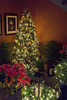 DSC03863.jpg (imfaral) Tags: biltmore christmas