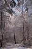 Winter magic (Irina1010_out for sometime) Tags: winter light sunshine trees forest snow december2017 beautiful magic canon nature neige hiver outstandingromanianphotographers