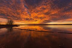 Chatfield State Park, Colorado (mclcbooks) Tags: sunrise dawn daybreak beach lake reflections clouds ice lakechatfield chatfieldstatepark colorado landscape trees silhouettes