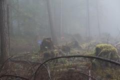 Misty Mountain Walk-1.jpg (@Palleus) Tags: nanaimo ammonitefalls beagle bensonfalls doumont fog mist misty mountbensonregionalpark mountainbike pibble pitbull rain sharpei trail trailhike vancouverisland